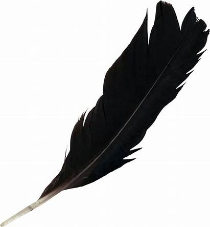 Feather Transparent Clipart Feathers Elegant Lightweight Clip