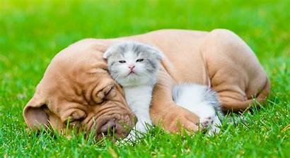 Hugging Animals