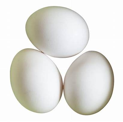 Eggs Transparent Background Clipart Egg Clip Library