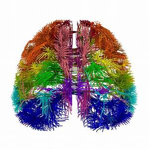 First Wiring Diagram Of Mouse Brain Created