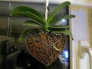 Pflanzen Zum Aufhängen : schwebende pflanzen trend aus japan garten und ~ Michelbontemps.com Haus und Dekorationen