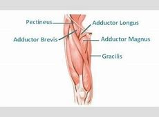 Adductor muscles injury, Adductor injury Videoreha