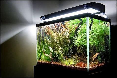 Modern Lighting Systems For Freshwater Aquarium