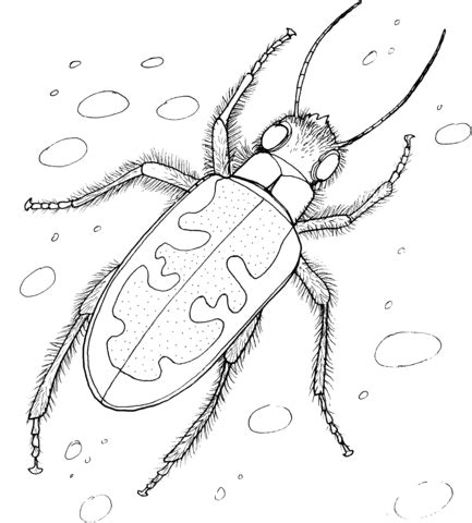 tiger beetle coloring page supercoloringcom