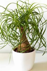 Pflegeleichte Zimmerpflanzen Mit Blüten : top 10 pflegeleichte zimmerpflanzen die starke g rtnerin ~ Eleganceandgraceweddings.com Haus und Dekorationen