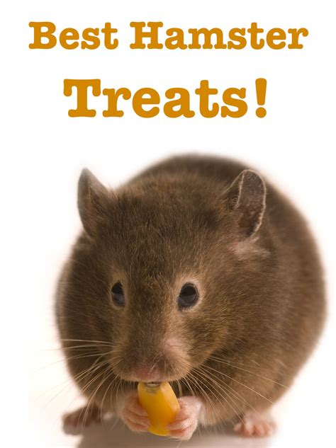 Best Hamster Treats Reviews And Top Tips For Making Your Own