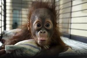 Most Adorable Baby Animal Photographs Of 2013 - Barnorama