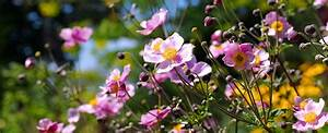 Pflanze Mit Roten Blüten : bildquelle lianem ~ Eleganceandgraceweddings.com Haus und Dekorationen