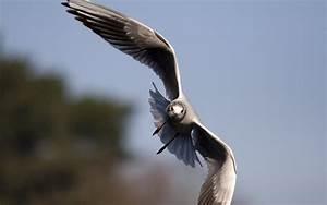 Animals Zoo Park: Birds Flying Wallpapers for Desktop ...