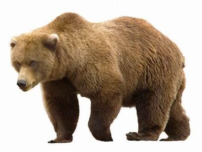 Bear Transparent Purepng Animals