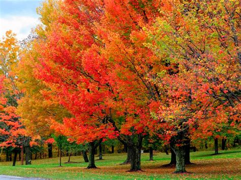 trees with fall color trees quot r quot us inc november tree care tips from trees quot r quot us inc