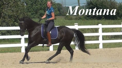quarter horse dressage montana training