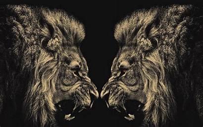 Lion Cool Screensaver Walldiskpaper