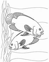 Coloring Fish Pages Aquarium Printable Tropical Oscar Sheet Oscars Oasis Realistic Colouring Sheets Tank Couple Printables Easy Getcolorings Kidscp Young sketch template