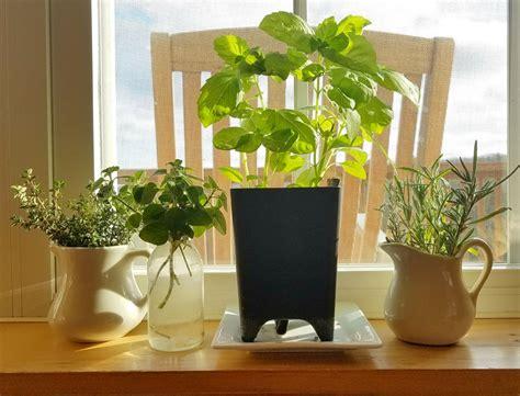 Windowsill Flower Garden by How To Grow Herbs Indoors On The Windowsill This Winter