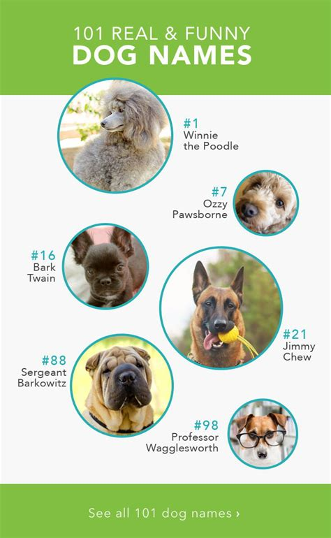 names dog funny dogs pet pets puppy silly funniest care animals memes infographic weird fun breeds boy fluffy courtesy baby