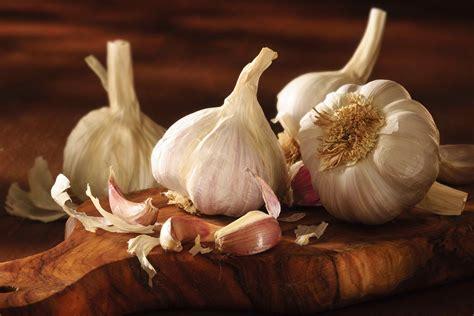 garlic poisoning  cats symptoms  diagnosis