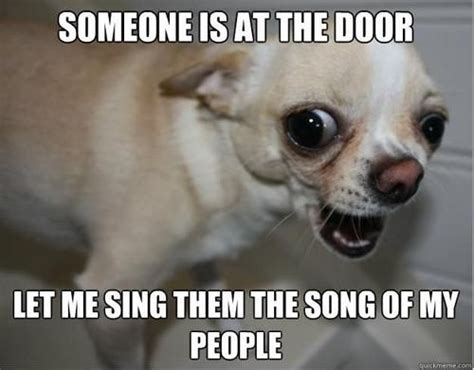 Funny Chihuahua Memes - 323 best ay chihuahua images on pinterest