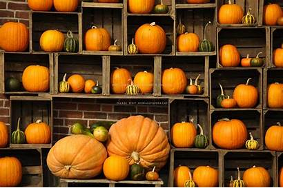 Pumpkin Autumn Wallpapers Pumpkins Fall Desktop Display