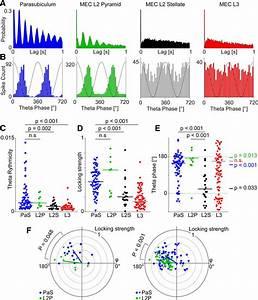 Theta Modulation Of Parasubicular Neurons Compared With