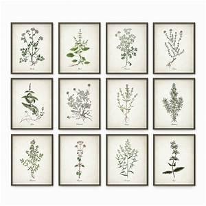 kitchen herbs wall art print set of 12 vintage botanical With wall art prints