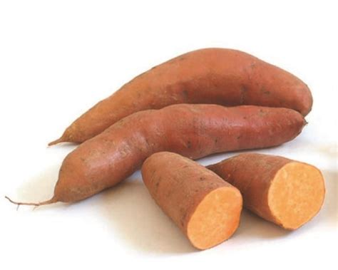 sweet potatoe how to plant and grow sweet potatoes how tos diy