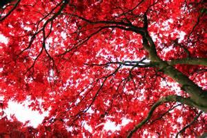 Trees 2048