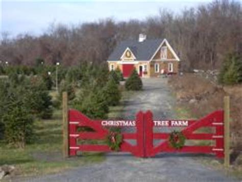 rhode island christmas tree farm your own in rhode island farm fresh ri