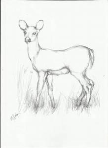 simple line drawings of deer - Google Search | Charcoal ...