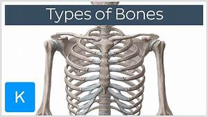 Types Of Bones In The Human Skeleton