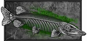 Northern Pike Skeleton
