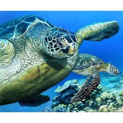 Green Sea Turtle Digital Art by Owen Bell