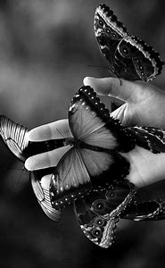 Black and White Butterfly Photography