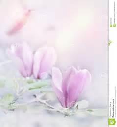 Magnolie Blüht Nicht : magnolie bl ht aquarell stockfoto bild von digital blumenblatt 50670410 ~ Buech-reservation.com Haus und Dekorationen
