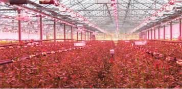 led grow lights ballast free heat free low wattage