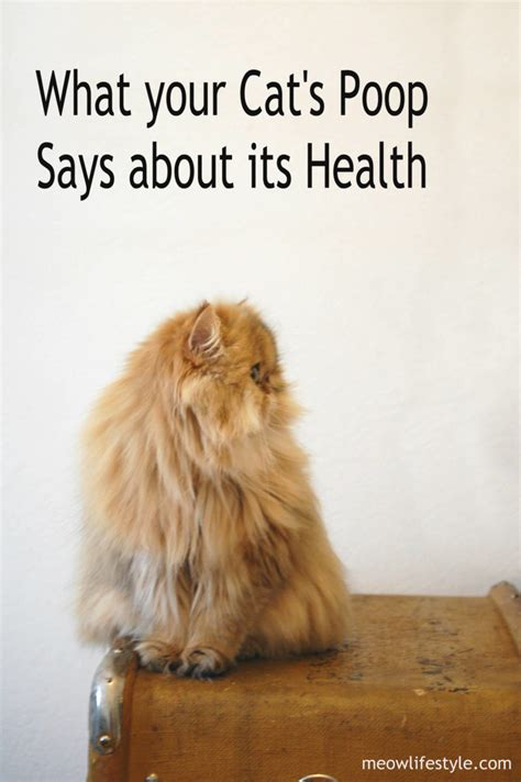 cats poop    health meow lifestyle
