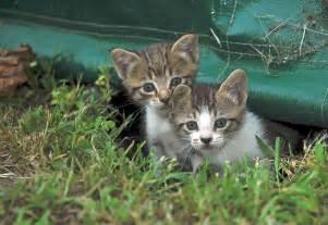 cat pair names cats my cool homeschool