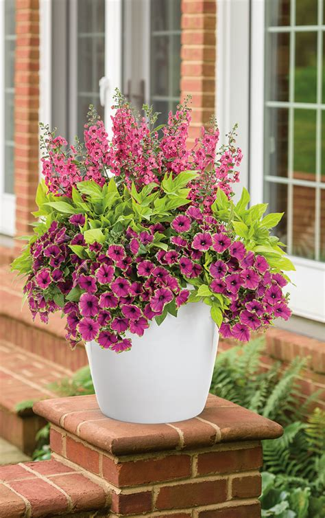 outdoor potted plants sun breathtaking is a container recipe that will love the sun and will be easy to care for too