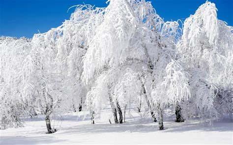 Free Winter Picture by High Definition Colourfull Landscapes Snow Landscape