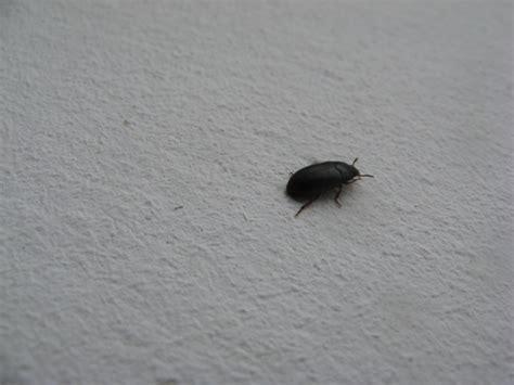 insectes qui squattent ma maison
