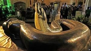 Giant prehistoric Titanoboa snake 'could return'! - CBBC ...