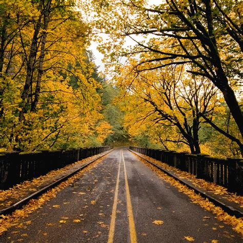 Fall Road Iphone Wallpaper by Autumn Wallpaper For Wallpapersafari
