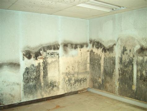 mold remediation  bug waterproofing