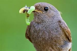 Kleine Vögel Im Garten : pflege und auffangstationen f r v gel und wildtiere nabu ~ Lizthompson.info Haus und Dekorationen