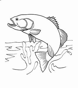 salmon jumping out of water coloring page - Google Search ...