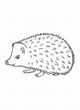 Hedgehog Coloring Porcupines Line A4 Colour Animals Printable Draw Cartoon Drawings Coloringbay Results Don sketch template