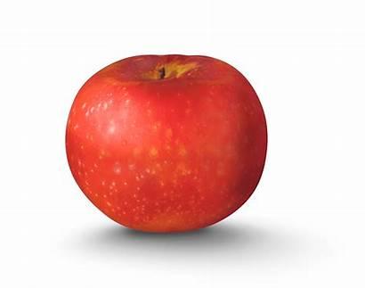 Paula Apple Sweet Varieties York