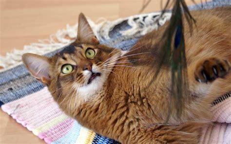 Katzen Vom Beet Fernhalten by Katzen Pflanzen Fernhalten Ungiftige Pflanzen F R
