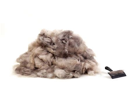 hair shedding in winter 5 ways to reduce excessive shedding in winter