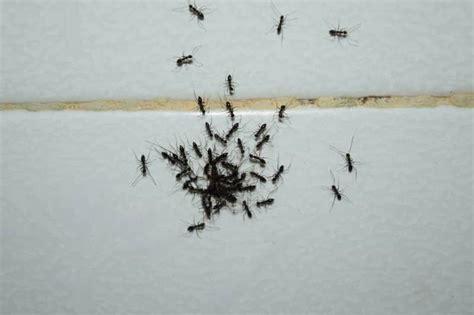 Small Ants In Bathroom Winter - Thedancingparent.com